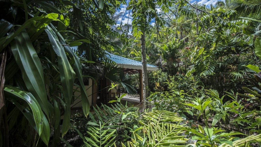 Ecolodge au Costa Rica en totale immersion dans la nature